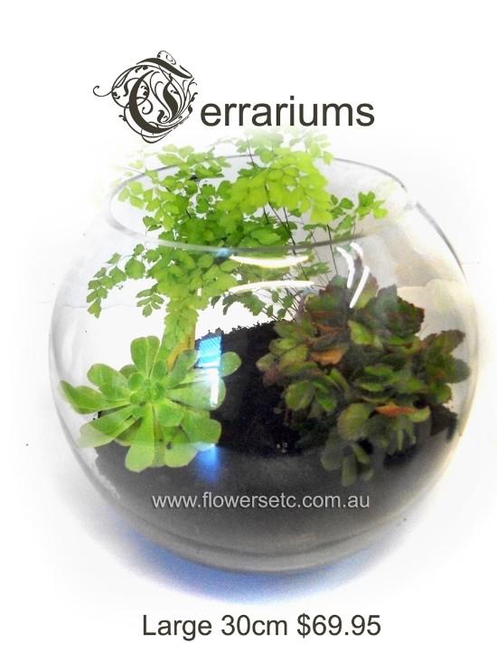 Plants Terrariums